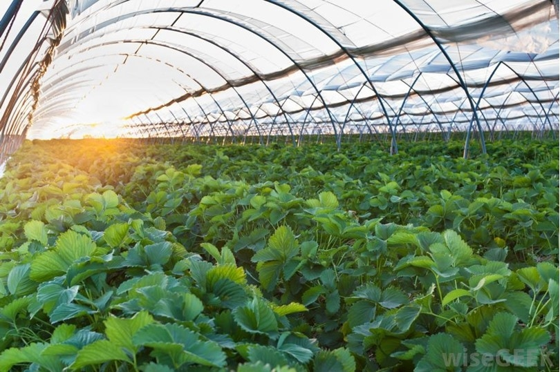 What are greenhouse ventilation methods in summer?